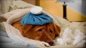 Los animales están enfermando de cáncer por culpa del humano