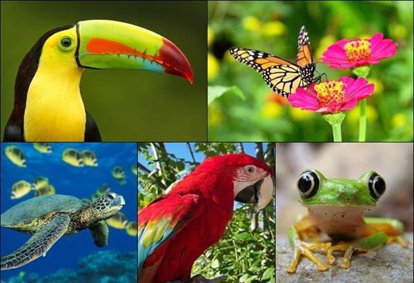 Estudio advierte que cambio climático modificará diversidad biológica