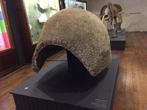 Encuentran en Uruguay el fósil de un gliptodonte de unos 16.000 años