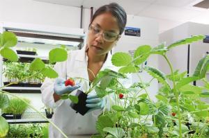 Robótica, genética y agricultura espacial, claves en lucha contra el hambre