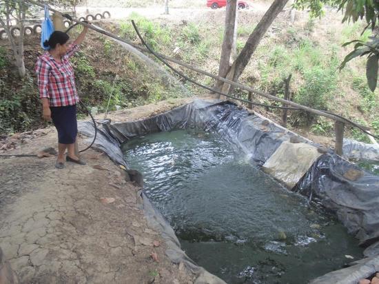 Fabricaron piscinas en su terreno para criar chames y Piscinas para tilapias