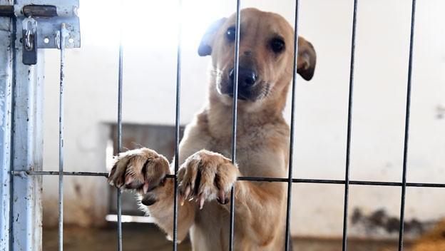 Alertan sobre abusos sexuales a animales en Ecuador y piden sanciones