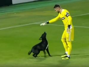Perro invade cancha y  paraliza un partido por unos minutos