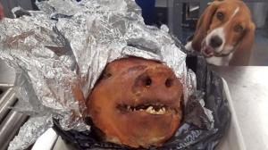 Encontraron un chancho hornado en la maleta de un ecuatoriano en Estados Unidos