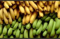 Bolivia, Colombia, Ecuador y Perú adoptarán medidas contra plaga del banano