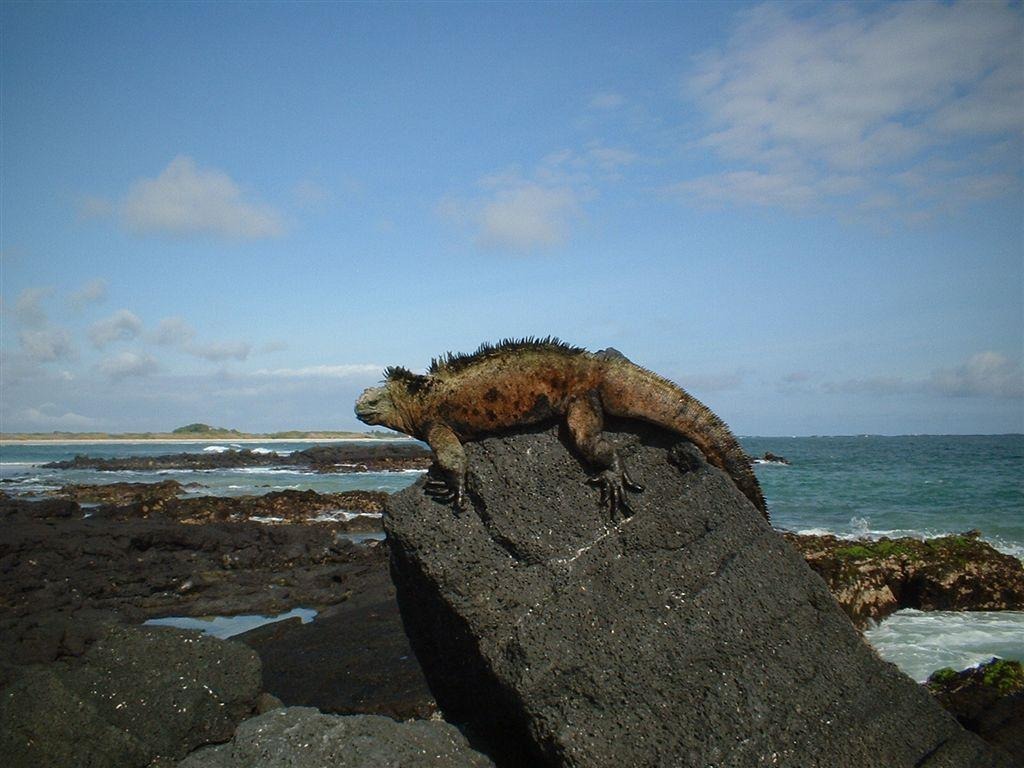 Exigen carta de invitación para turistas que lleguen a casas en Galápagos