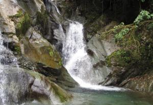 Descubren cuatro nuevas especies de insectos acuáticos en Ecuador