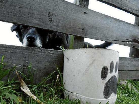 El 95 % de mujeres con mascotas maltratadas sufrieron violencia