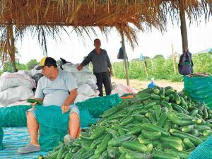 La séptima provincia en extensión agraria recibe más que Manabí