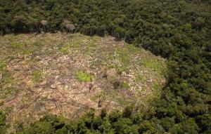 La Amazonía peruana perdió 31.500 hectáreas por cultivos de palma aceitera