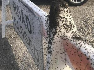 Miles de arañas se reúnen a un costado de una vía