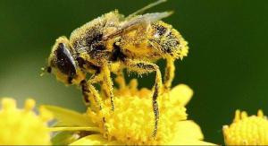 La Universidad de Loja desarrolla proyecto para reproducir abejas sin aguijón