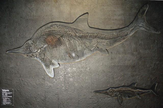 Encuentran restos de piel de un reptil marino de hace 180 millones de años
