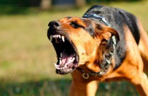 Cuatro años de cárcel para un hombre por incitar a su perro a que ataque contra un refugiado