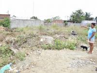 Terrenos baldios atraen a ratas