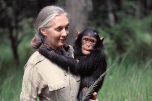 Jane Goodall: ''Estamos viviendo la sexta extinción masiva de especies''