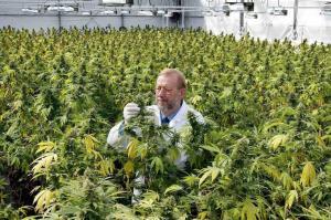 Nueva Zelanda hará un referéndum sobre uso de la marihuana recreativa en 2020
