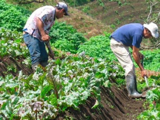 Gobierno alista un plan de refinanciamiento a favor de productores