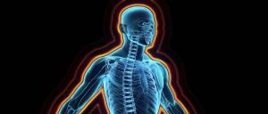 Decodifican por primera vez una parte clave del sistema inmunológico humano