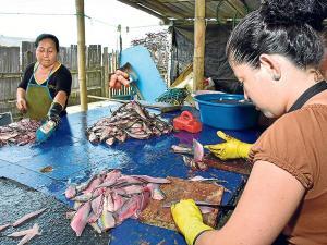 Veda de peces afectaría a 4 mil personas de la parroquia Crucita