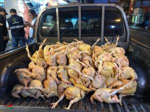 250 pollos fueron decomisados