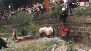 Niña es rescatada a tiempo tras caer en una jaula de osos panda