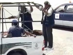 Un toro causa zozobra en el aeropuerto de Sucre, la capital de Bolivia