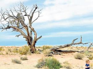 22 horas en el desierto