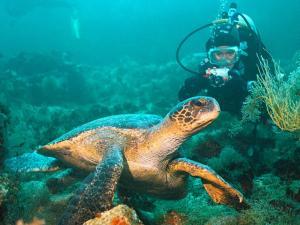 Vida y aventura bajo el agua