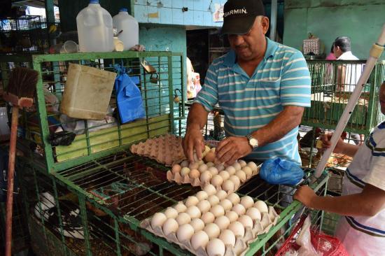 Huevos y aves  al paso