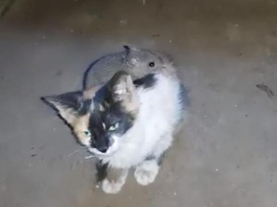 Un ratón doma a un gato