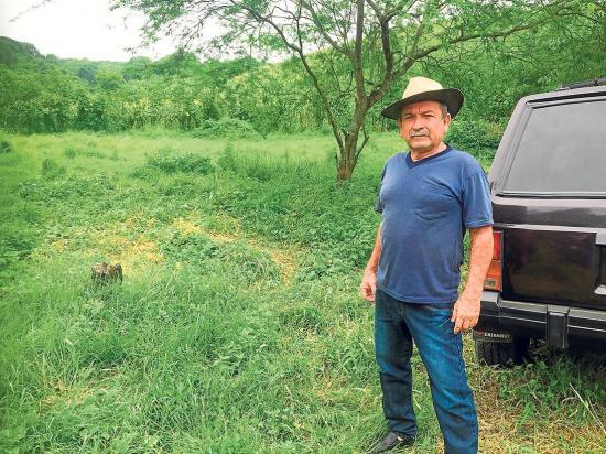 Robavacas matan las reses en el corral