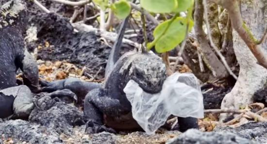 Documental revela imágenes desgarradoras de la contaminación por plásticos en Galápagos