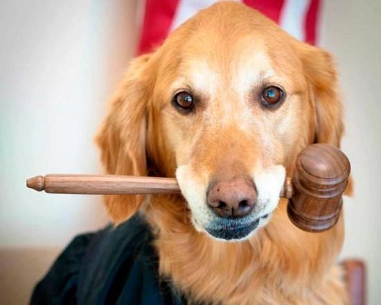 Juez define custodia de mascota de pareja divorciada