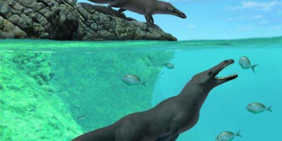 Hallan restos de una ballena con cuatro patas