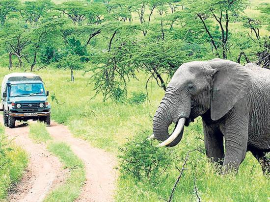 Elefante aplasta a cazador