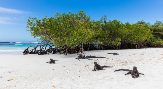 Alertan en Galápagos por descubrimiento de muchas más especies invasoras