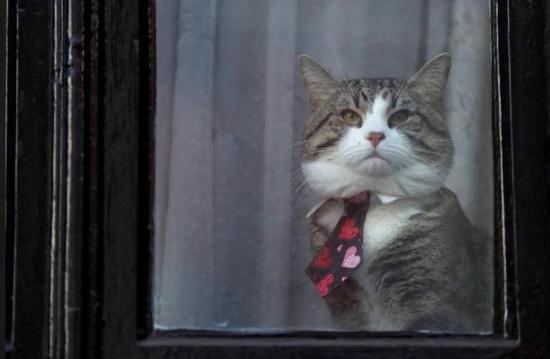 ¿Cuál fue el destino del gato de Julian Assange?