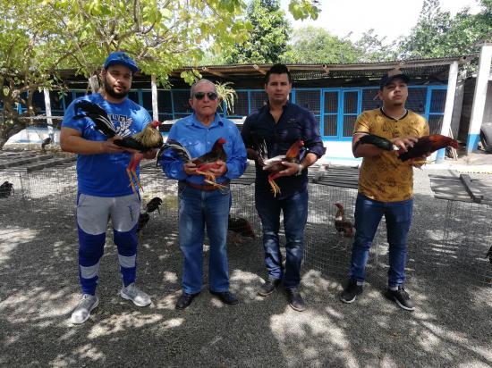 Galleros se citan en El Palenque