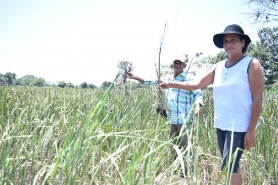 Agricultores en crisis