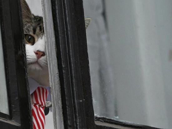 Hasta el gato es sospechoso