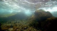 Científicos identifican cerca de 200.000 especies de virus marinos