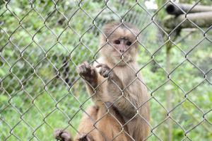 El refugio de más de 200 animales