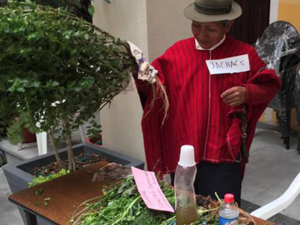 Los yachaks confían en sus plantas | El Diario Ecuador