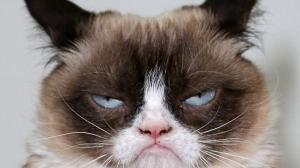 Grumpy Cat, la gata más famosa de intenet murió