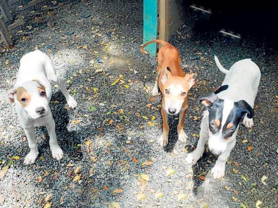 85 mascotas buscan hogar