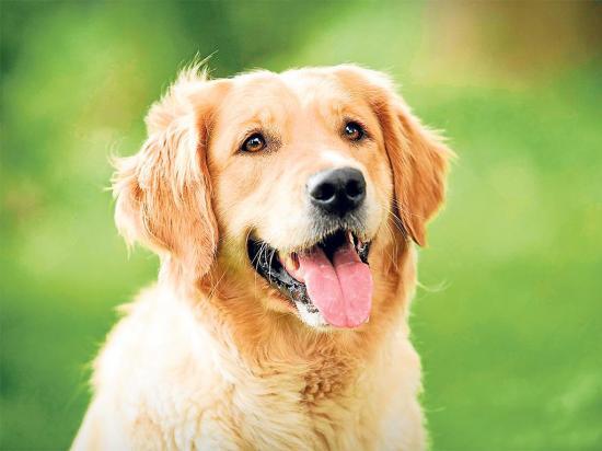 Si tienes un perro debes conocer sobre ellos