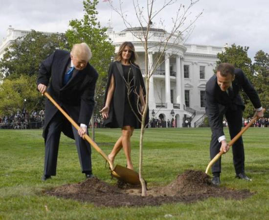 """Muere """"árbol de la amistad"""""""