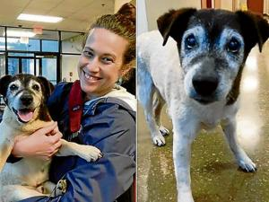 Mujer encuentra a su perro tras 5 años de búsqueda