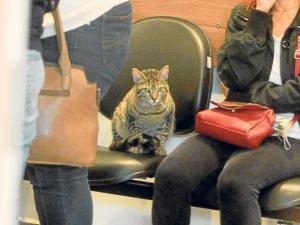 Gato asiste al velorio de su dueña